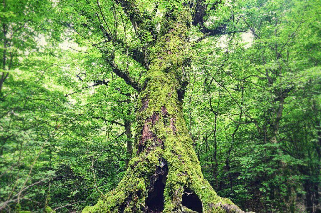 پوشش گیاهی و جنگلی روستای مرزبن