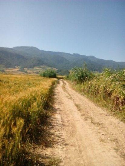 جاده بین مزارع مرزبن